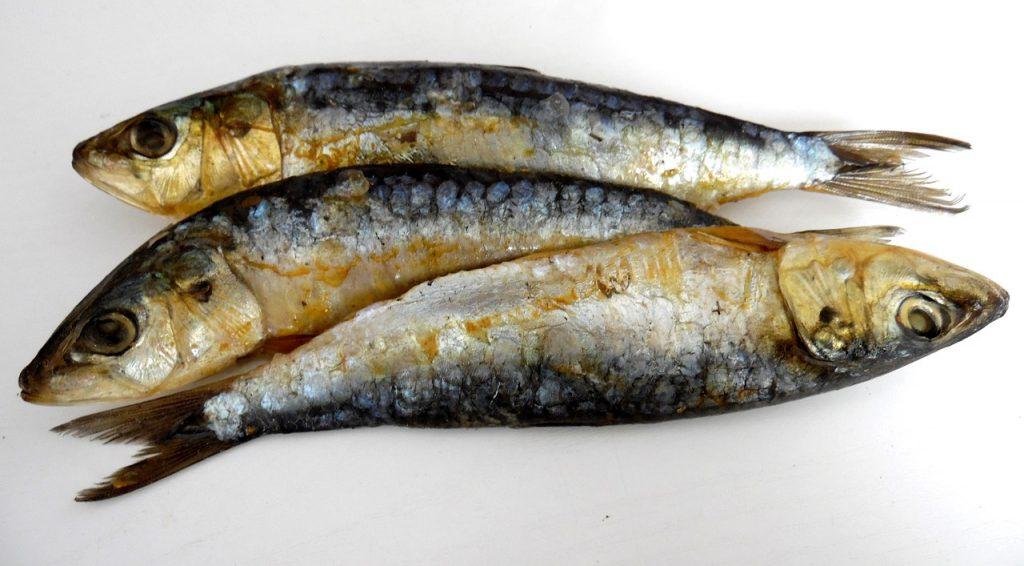 Drei gegrillte Sardinen