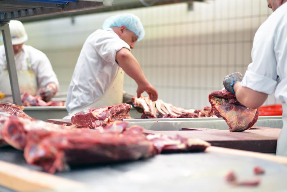 Zerleger in weißer Arbeitskleidung mit Hauben am Band mit Fleischstücken