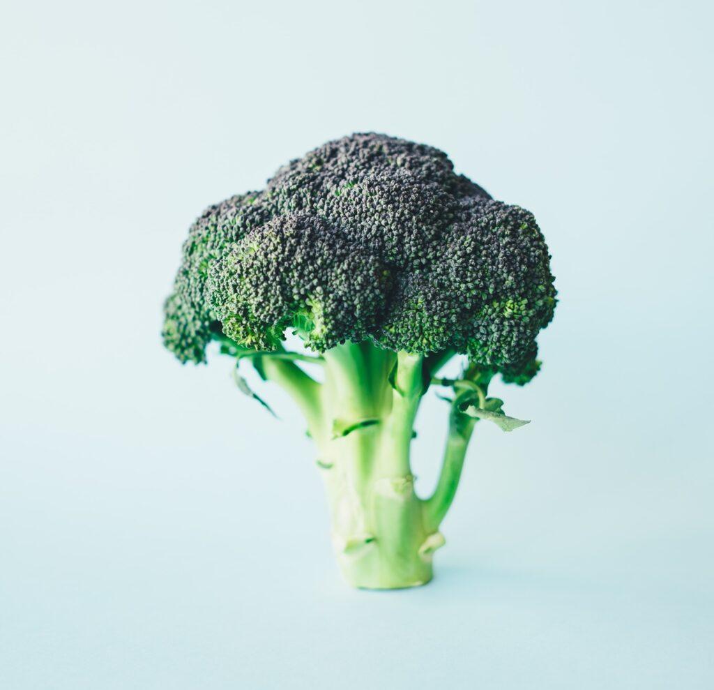 Ein grünes Brokkoliröschen auf blauem Fond